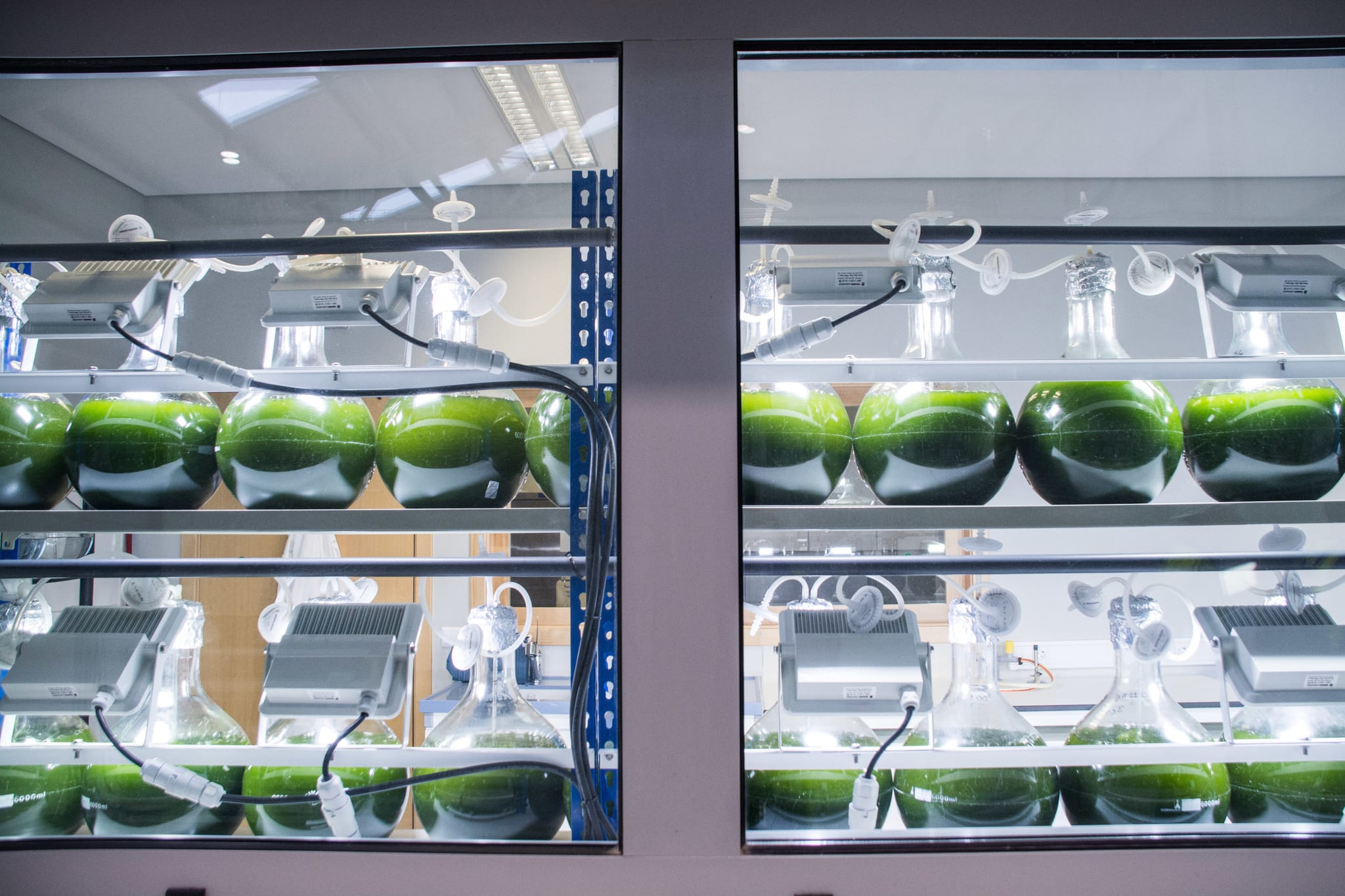 PÚBLICO | O que leva uma cimenteira a produzir microalgas?