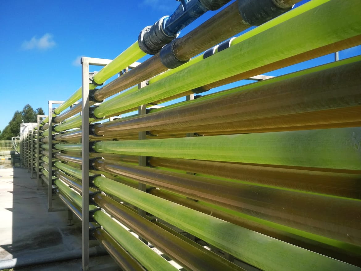 Hatchery Feed & Management | Microalgae as a nutritional and bioactive source for aquafeed