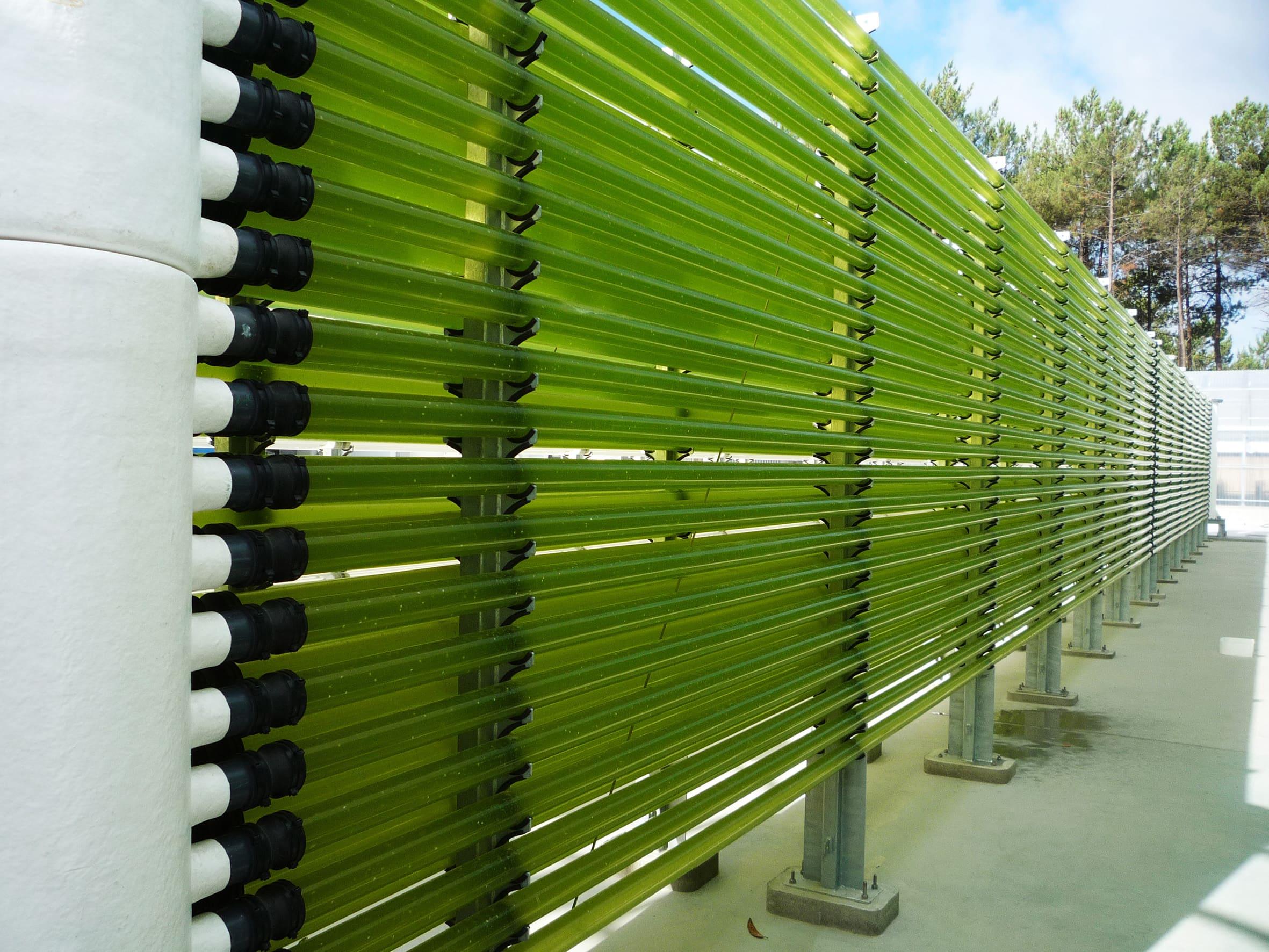 Hatchery Feed & Management | Allmicroalgae set to double production of algae-based ingredients